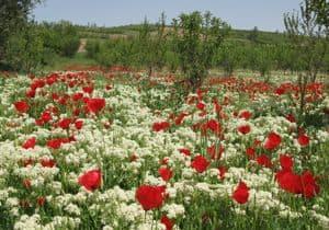 flores y primavera