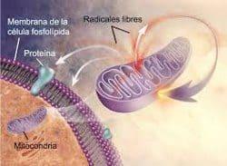 genes y proteínas