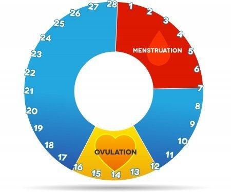 dias fertiles y ovulación