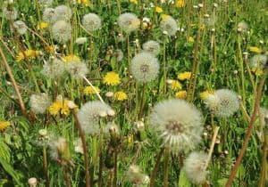 polen y alergia
