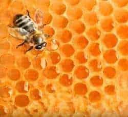 propóleo y abeja
