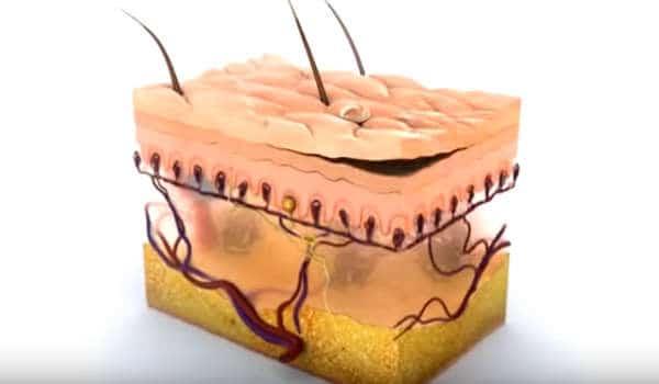 animación de la piel en 3D