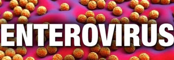 el enterovirus