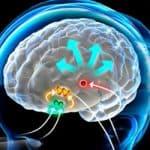 Relación entre la hormona natural Melatonina y el Cáncer