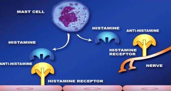 células histamina y anti-histamina