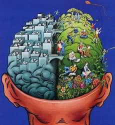 dibujo lados del cerebro