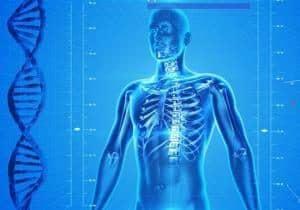 genética y esqueleto humano