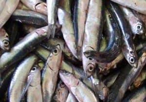 remedio pescado azul omega 3