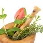 Plantas que nos ayudan a hidratar y proteger la piel