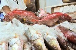 pescados y omega 3