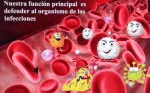 glóbulos blancos defendiendo el organismo