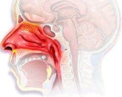 Remedios Caseros Naturales Para La Rinitis