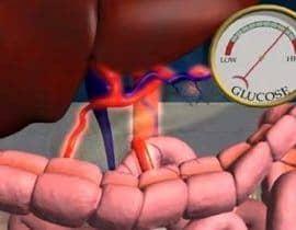 pancreas glucosa y insulina