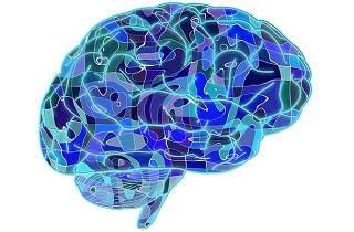 dibujo del cerebro