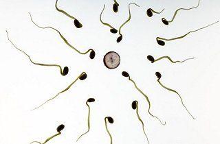 empermatozoides y fecundidad