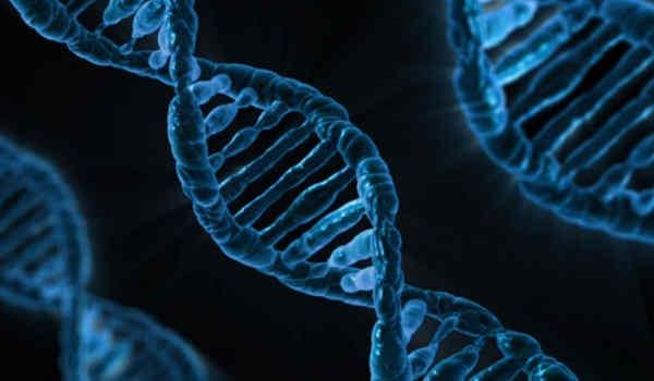 genetica ADN