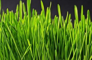 hierbas y plantas