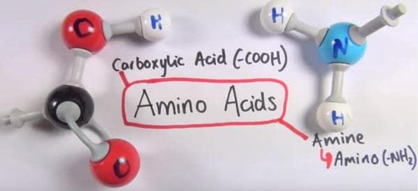 secuenciacion de amino acidos para adelgazar