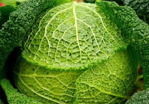 verdura repollo