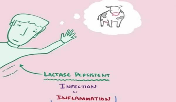 lactasia intolerancia lactosa