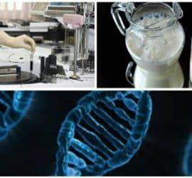 pruebas y diagnóstico de la galactosemia o intolerancia a la galactosa