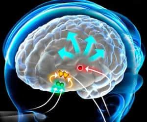 melatonina actuando en cerebro
