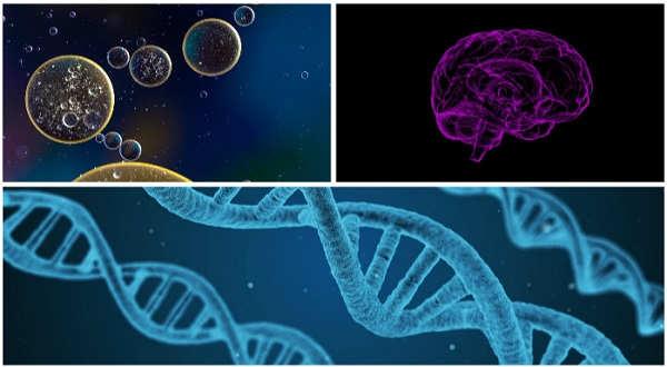 causas tumores cerebrales