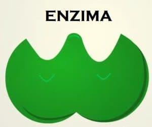 una enzima